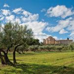Fossacesia (Ch). Oliveto nei pressi dell'abbazia di San Giovanni in Venere